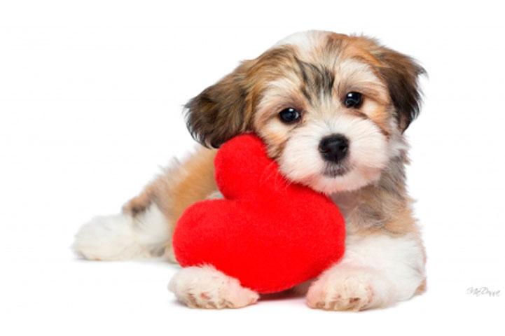 clinica-veterinaria-ponte-grande-ecocardiograma