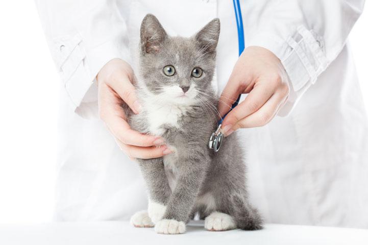 clinica-veterinaria-ponte-grande-eletrocardiograma