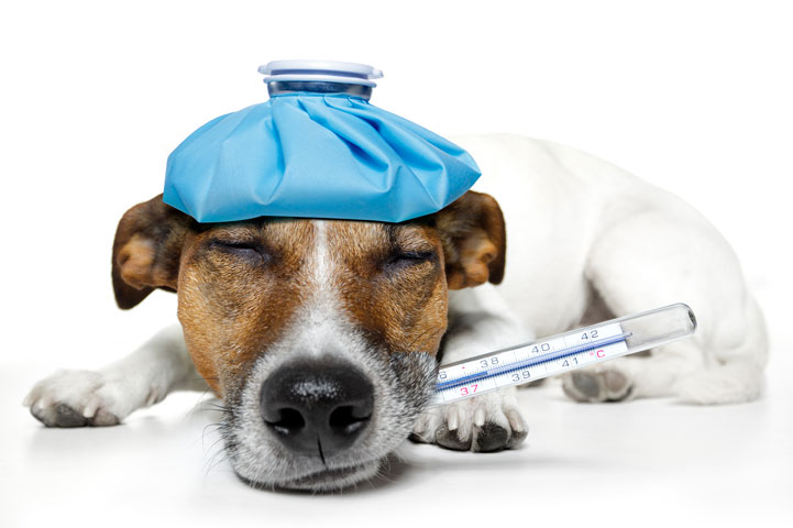 clinica-veterinaria-ponte-grande-farmacia2