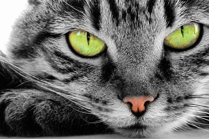 clinica-veterinaria-ponte-grande-oftalmologia